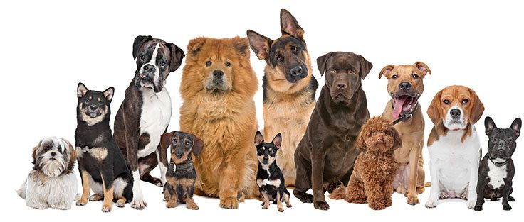 Que Perros