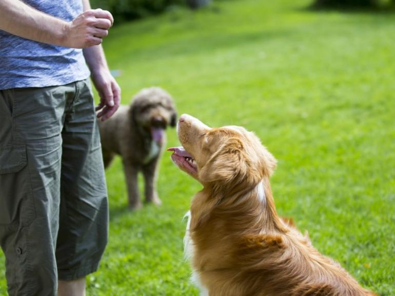 """""""La educación que le des a tu perro, a lo largo de su vida también influirá en tu fidelidad y en la de el perro mismo"""""""